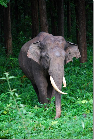 Elephant spotting in Nagarhole National Park