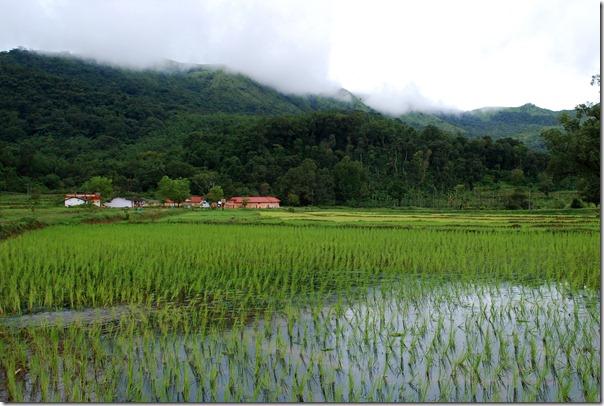 Coorg Landscape