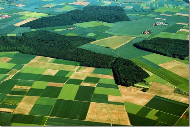 Tulip fields of Frankfurt