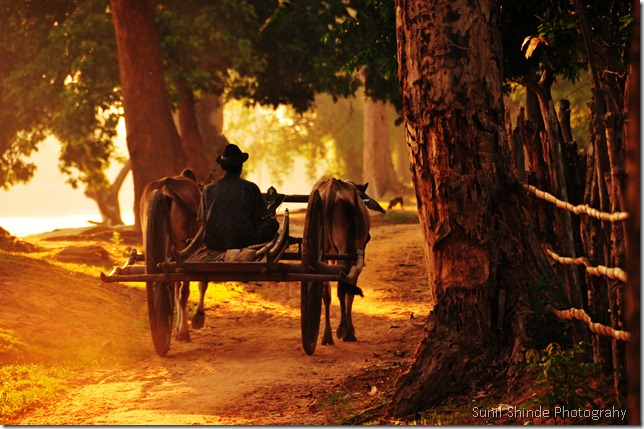 Khmer Ox Cart