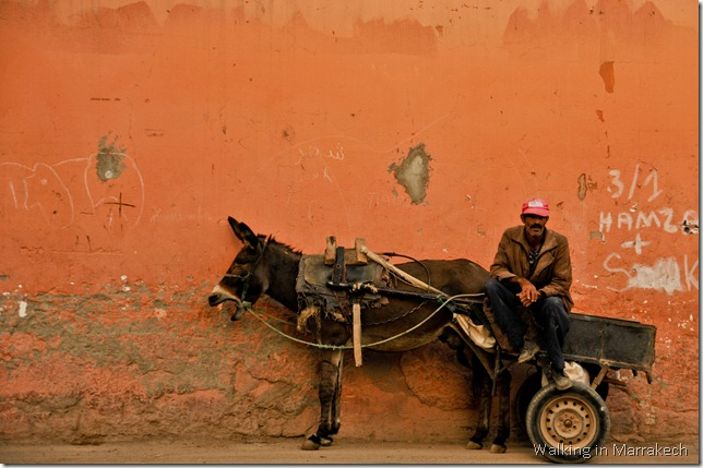 A Berber and his donkey cart