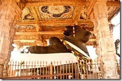 Nandi collosus at Brihadeshwara temple