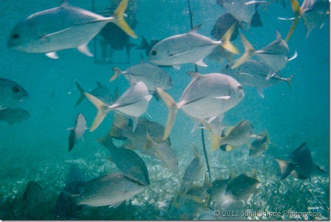 Under water - snorkeling in Belize