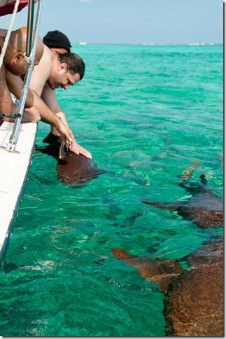 Feeding the sharks, San Pedro, Belize