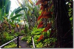 More Tropical Flora and Fauna on the 4 mile scenic drive, Hilo, Hawai'i