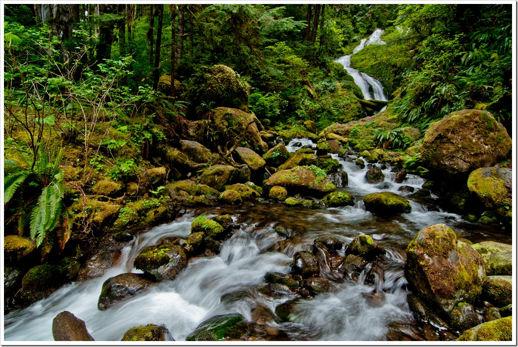 Bunch Creek Falls, Quinault, WA (72dpi)