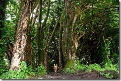 Tropical Trail at Rainbow Falls, Hilo