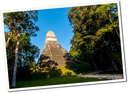 038 Grad Jaguar at Sunrise, Tikal National park, Guatemala