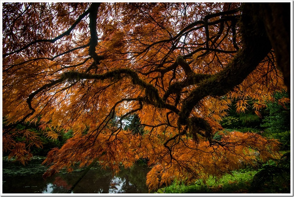 Fall Colors, Kubota Garden, Seattle